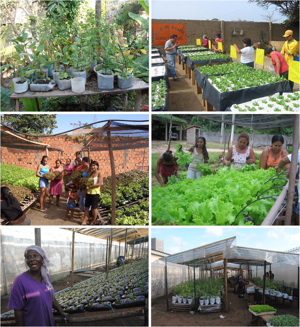 Urban Agriculture In The Developing World A Review Springerlink