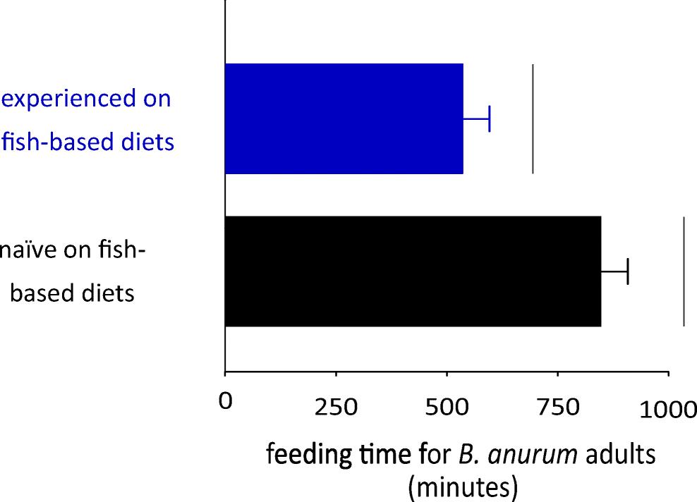 Life History Traits and Predatory Performance of Belostoma