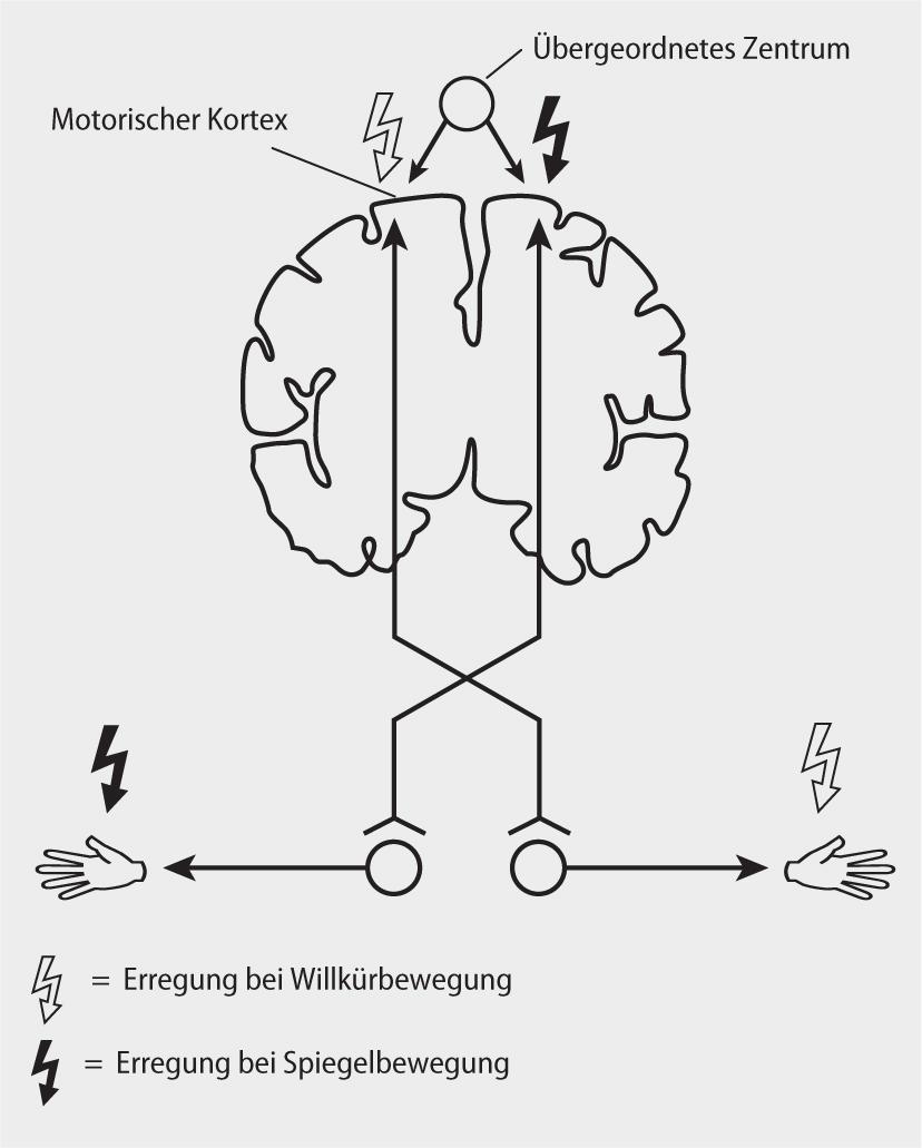 Wunderbar Anatomie Und Physiologie Ein Integrativer Ansatz 2 ...