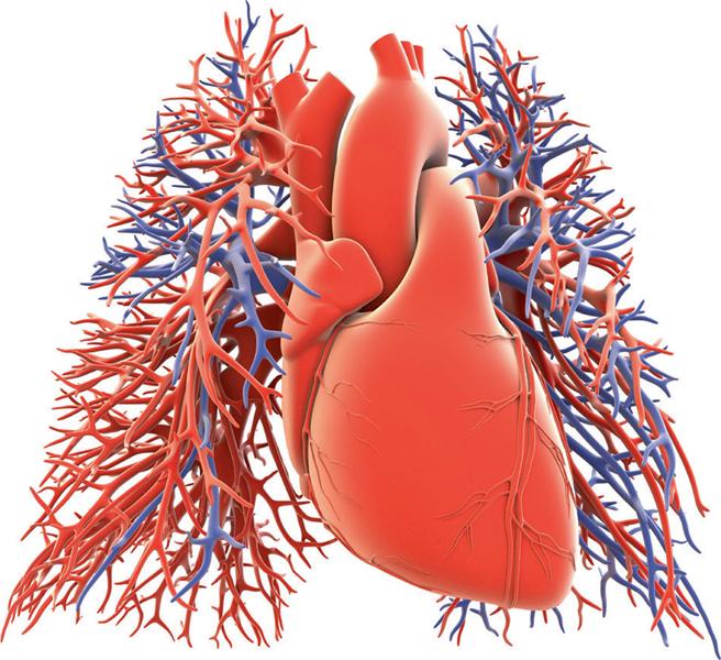 Herz trifft Lunge | SpringerLink