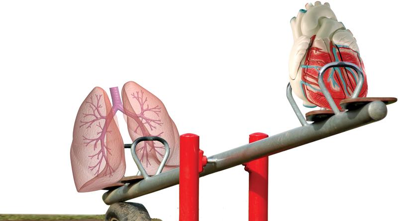 Herz und Lunge sind mehr als nur Nachbarn | SpringerLink