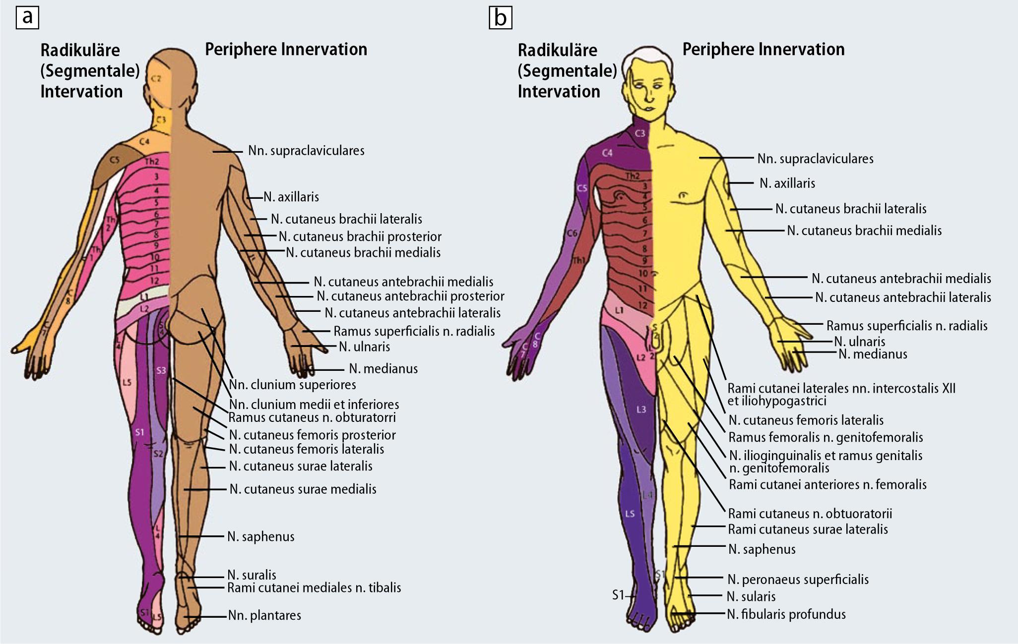 Atemberaubend Anatomie Und Physiologie Fortpflanzungssystem Praxis ...