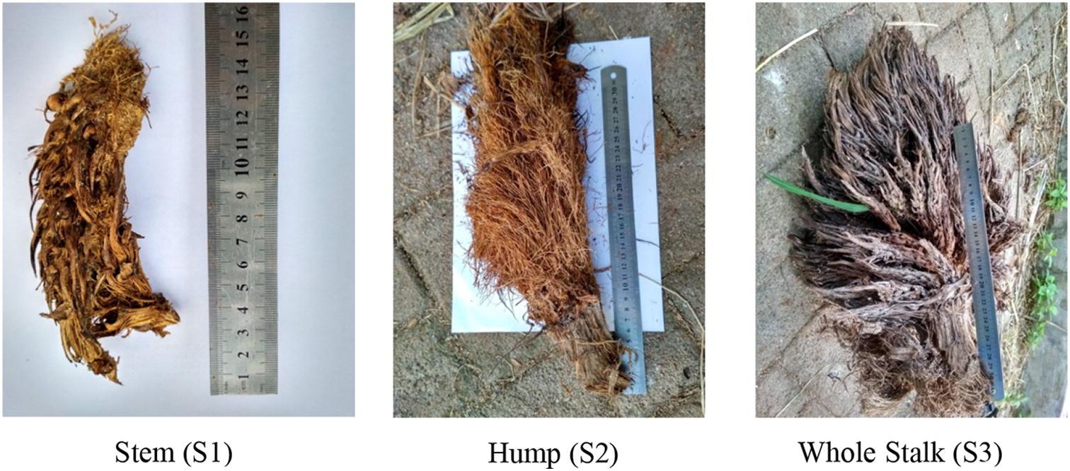 Cultivation of straw mushroom ( Volvariella volvacea) on oil