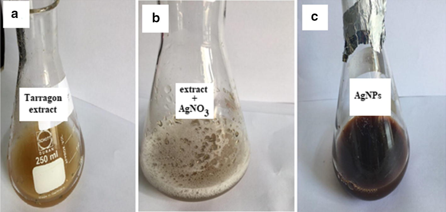 Biosynthesis of silver nanocomposite with Tarragon leaf extract and