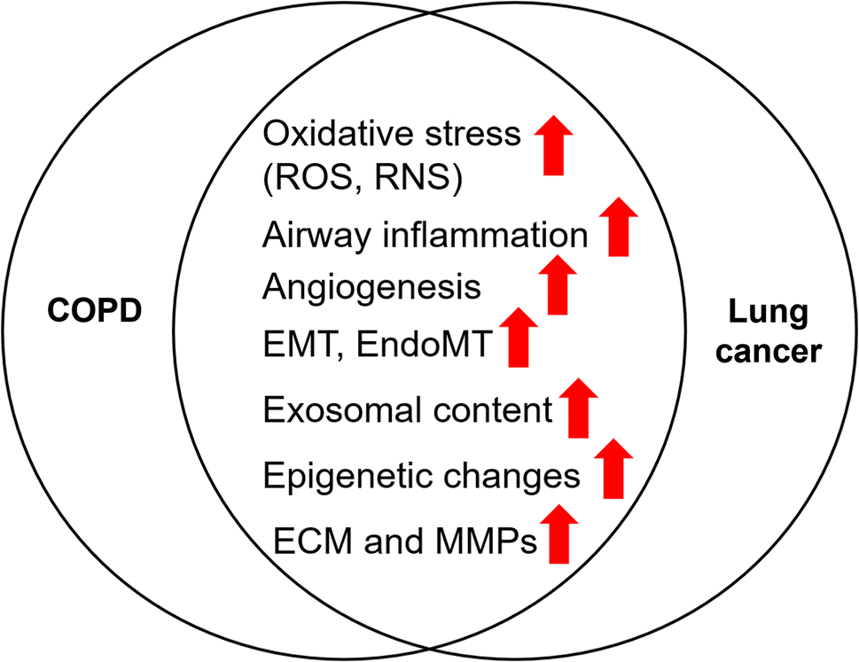 Chronic Obstructive Pulmonary Disease and Lung Cancer: Underlying