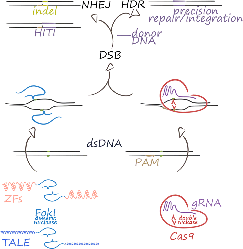 Disruptive Technology Crispr Cas Based Tools And Approaches