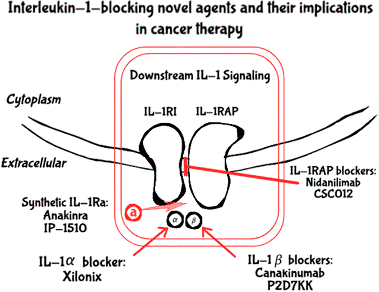 The Role of Interleukin-1 in the Pathogenesis of Cancer and