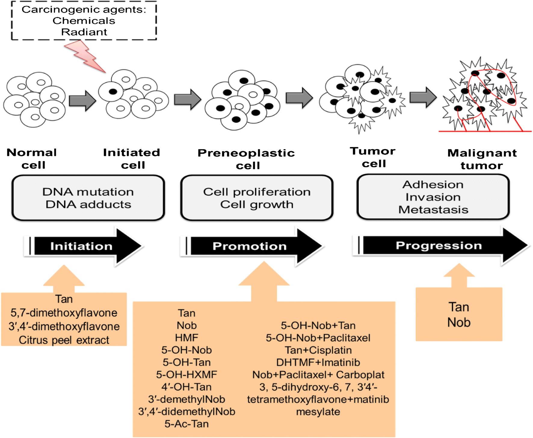 Polymethoxyflavones: Chemistry and Molecular Mechanisms for