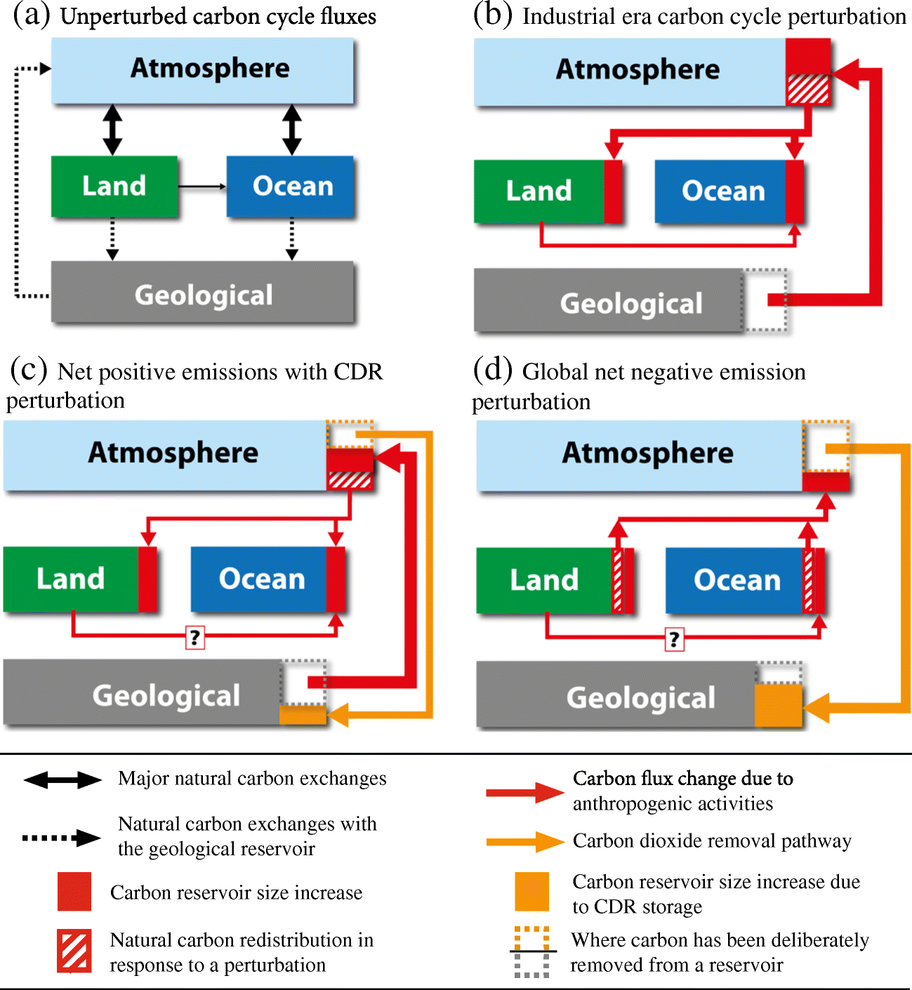 The Effects of Carbon Dioxide Removal on the Carbon Cycle