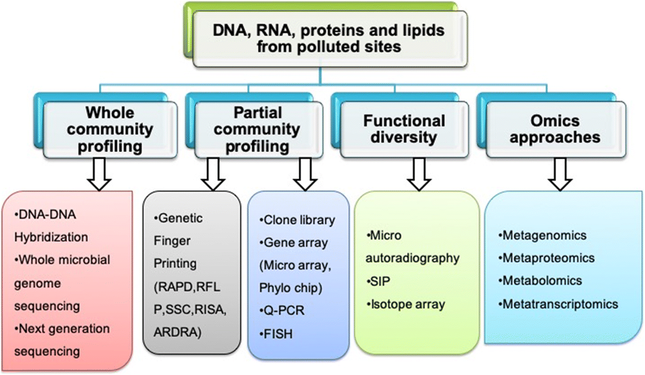 Microbial Fingerprinting of Potential Biodegrading Organisms