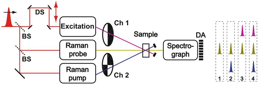 Multidimensional Vibrational Coherence Spectroscopy | SpringerLink