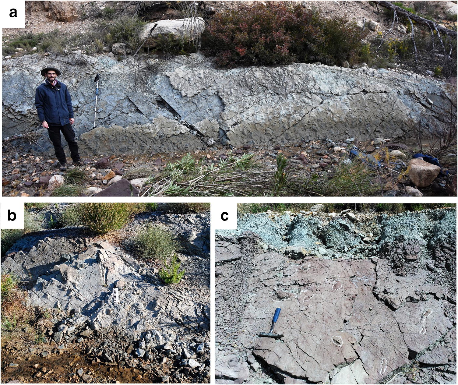 Swimming Reptile Prints From The Keuper Facies Carnian