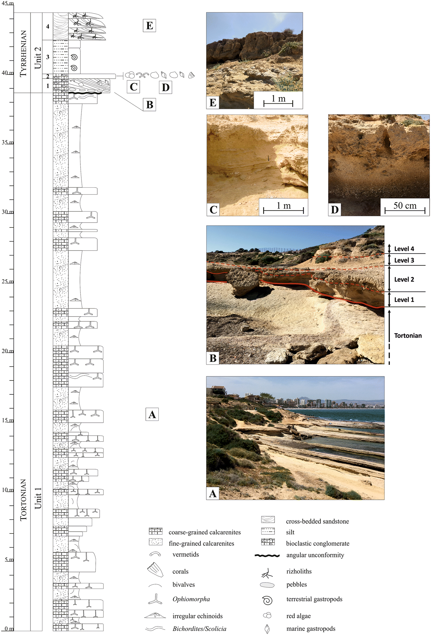 Taphonomy, ichnology, and palaeoecology to distinguish event beds in