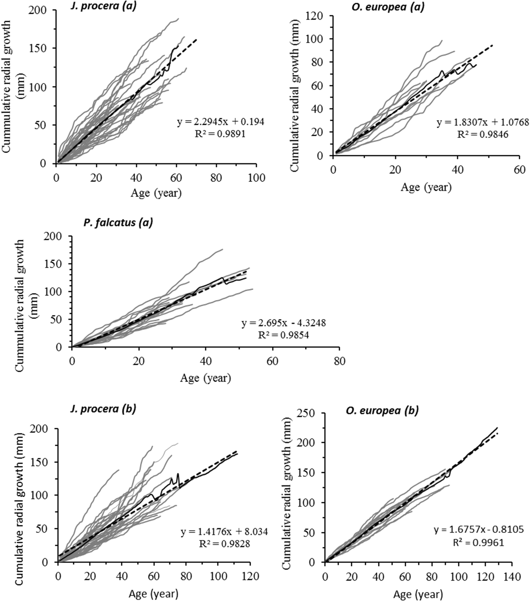 Growth trajectories and ages of main tree species in dry