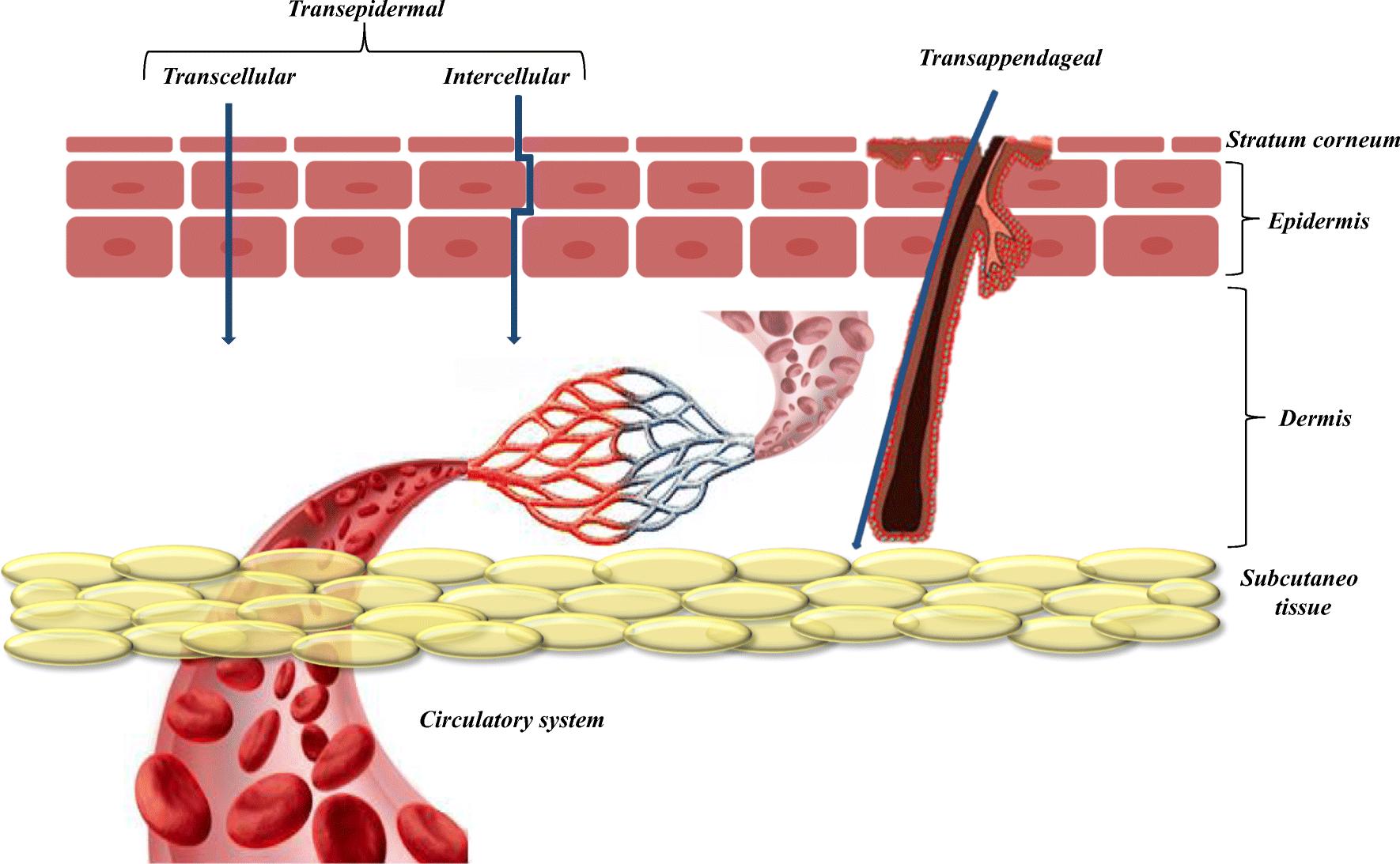 Clay Minerals in Skin Drug Delivery   SpringerLink