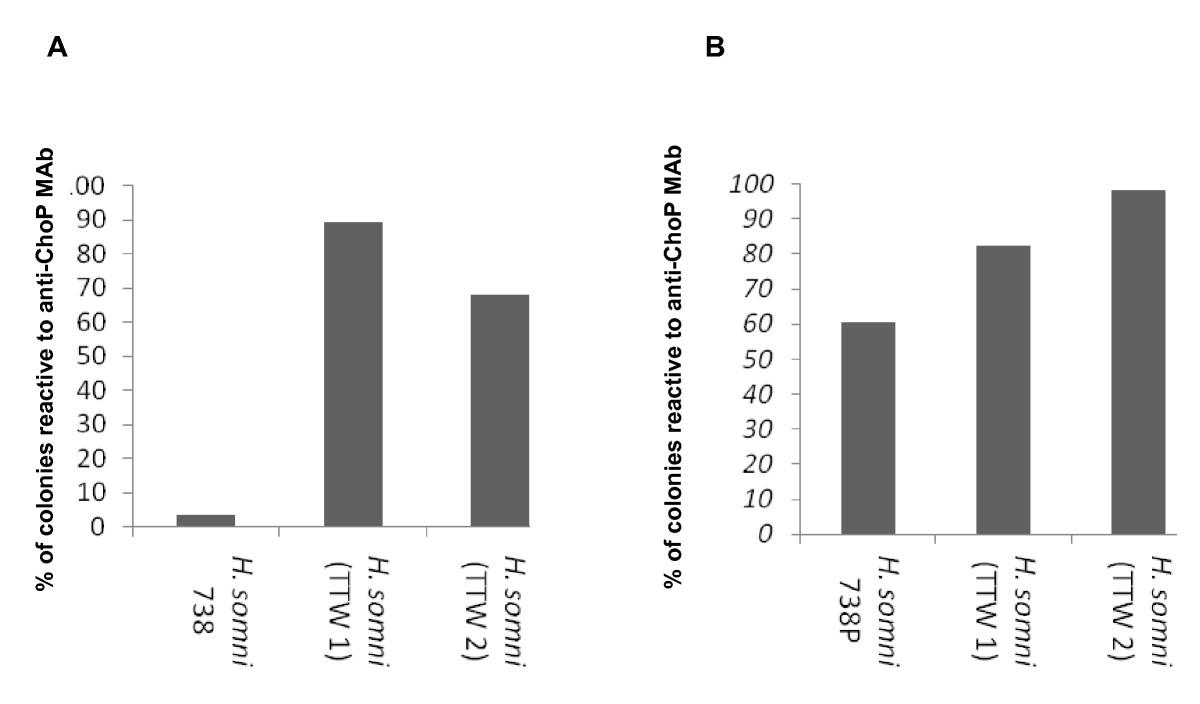 The role of lipooligosaccharide phosphorylcholine in