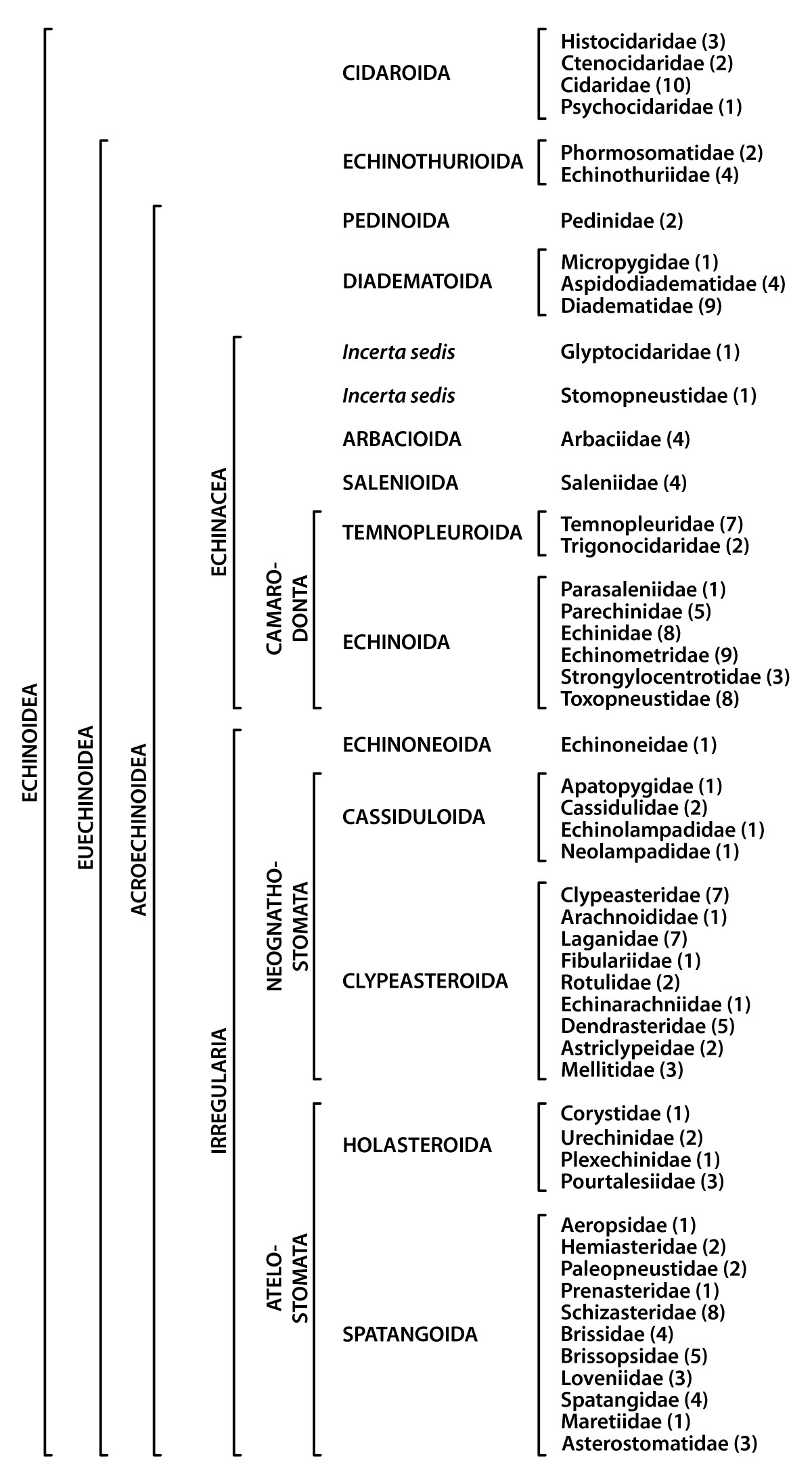 Origin and evolutionary plasticity of the gastric caecum in sea ...