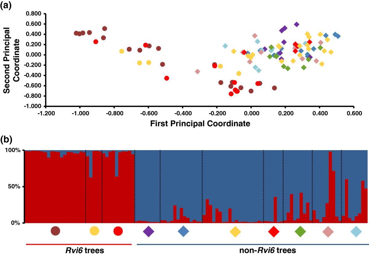 The genetic structure of a Venturia inaequalis population in a ...