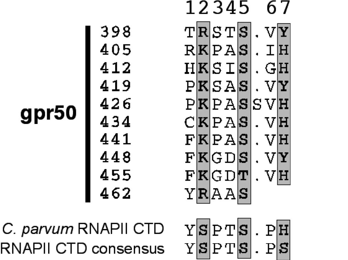 gpr50 is the mammalian ortholog of mel1c  evidence of