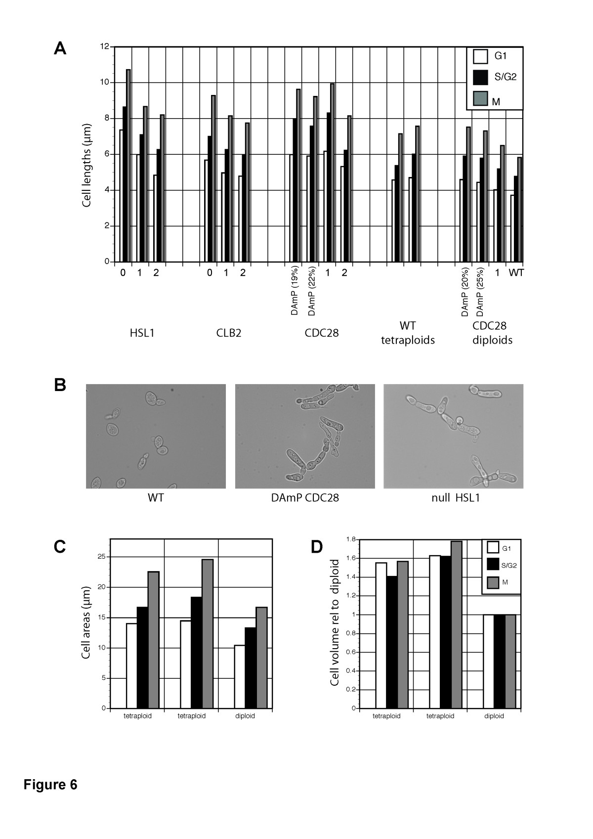 Control analysis of the eukaryotic cell cycle using gene copy number