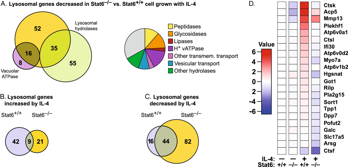 Reprogramming Of Lysosomal Gene Expression By Interleukin 4 And