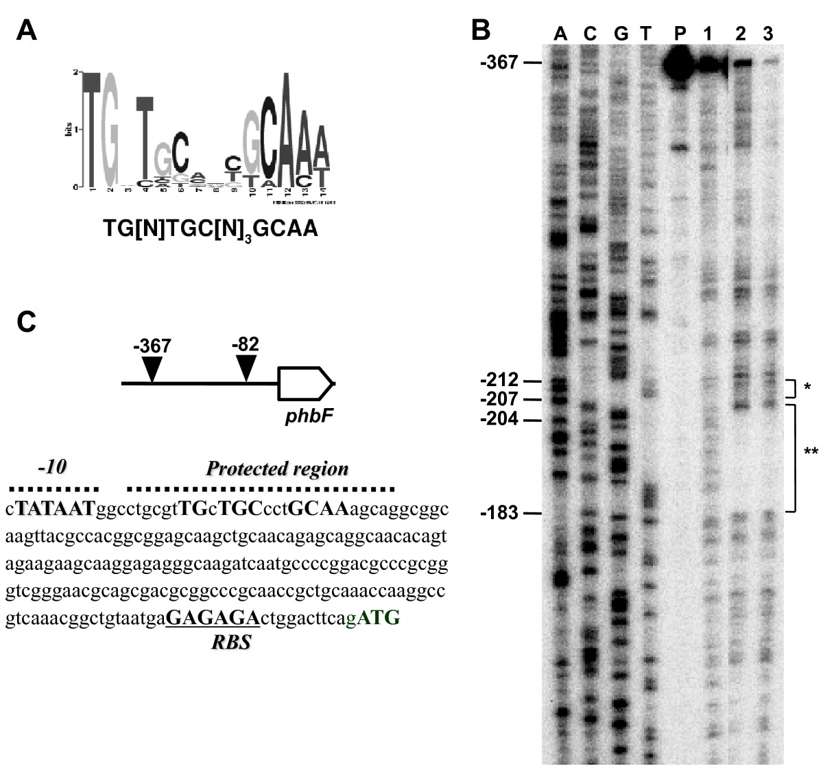 Identification And Characterization Of PhbF: A DNA Binding