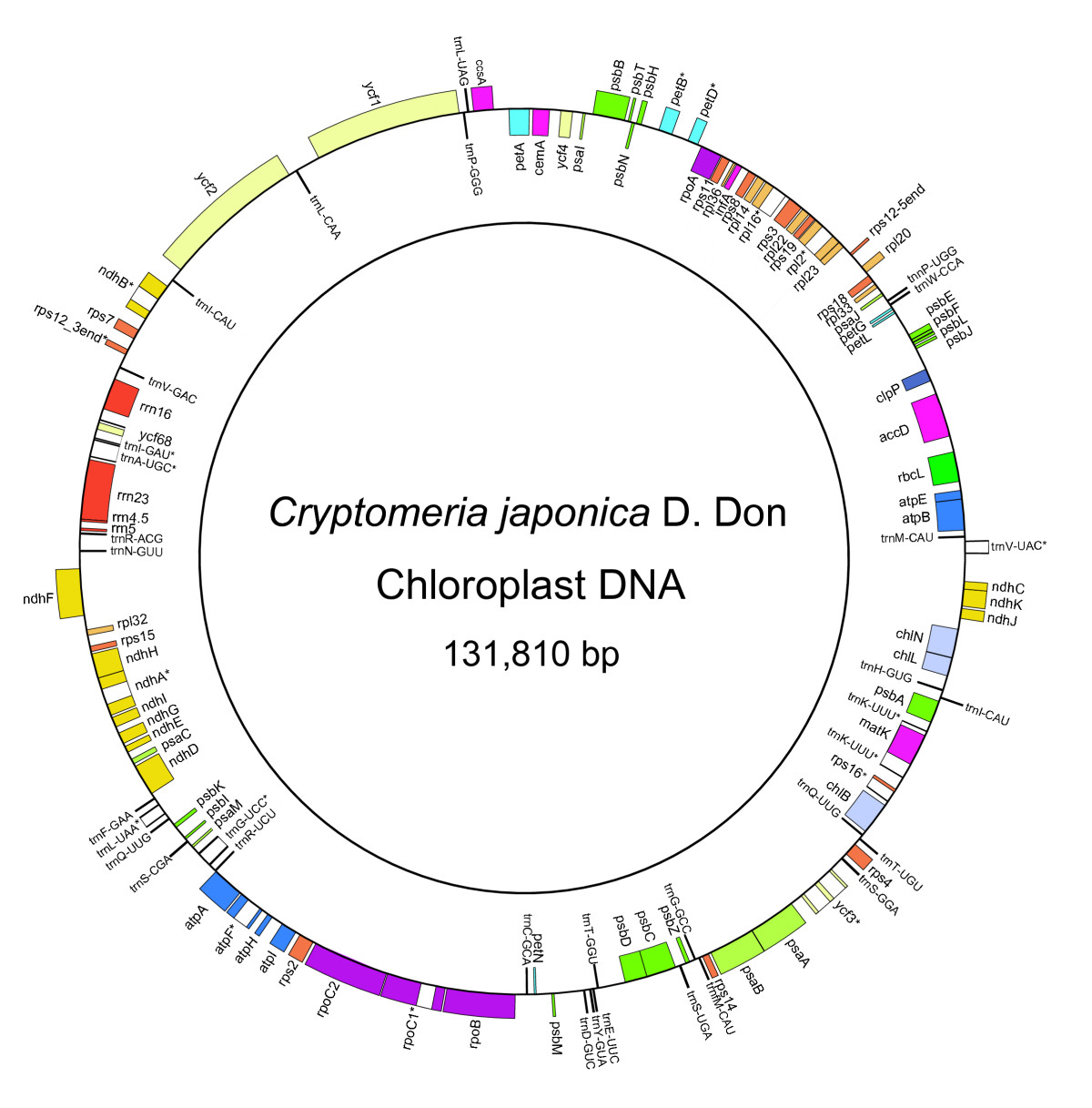 Complete nucleotide sequence of the cryptomeria japonicad don figure 1 ccuart Image collections