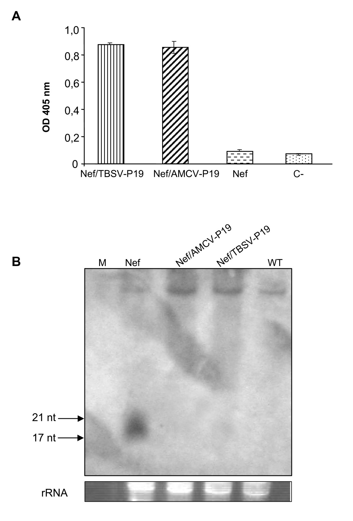 High Level HIV 1 Nef Transient Expression In Nicotiana Benthamiana
