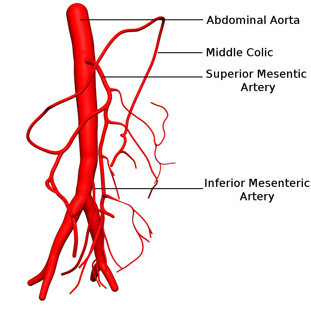 A Model Of Blood Flow In The Mesenteric Arterial System Springerlink