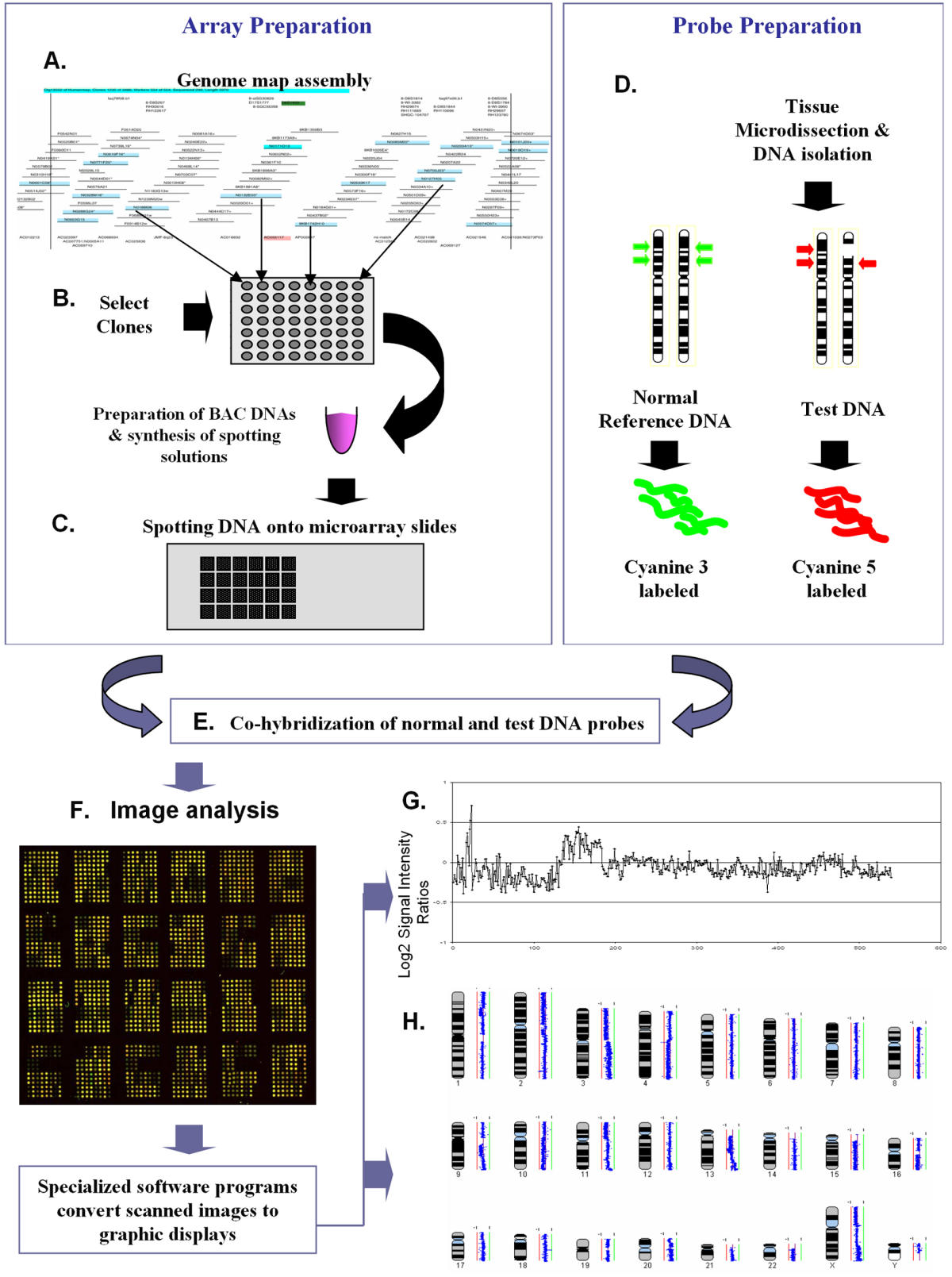 Genetic alteration and gene expression modulation during ... on