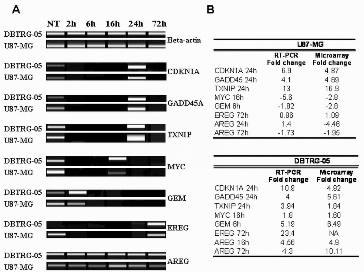 Gene expression time-series analysis of Camptothecin effects