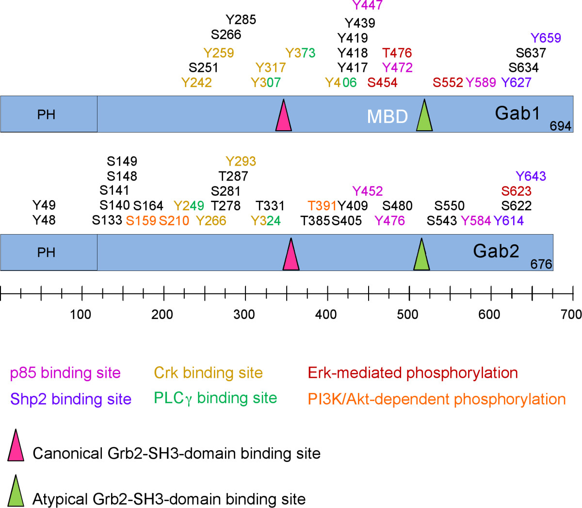 Function, regulation and pathological roles of the Gab/DOS