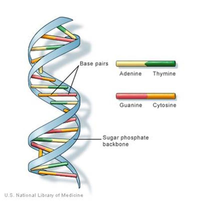 DNA nanotechnology: a future perspective   SpringerLink