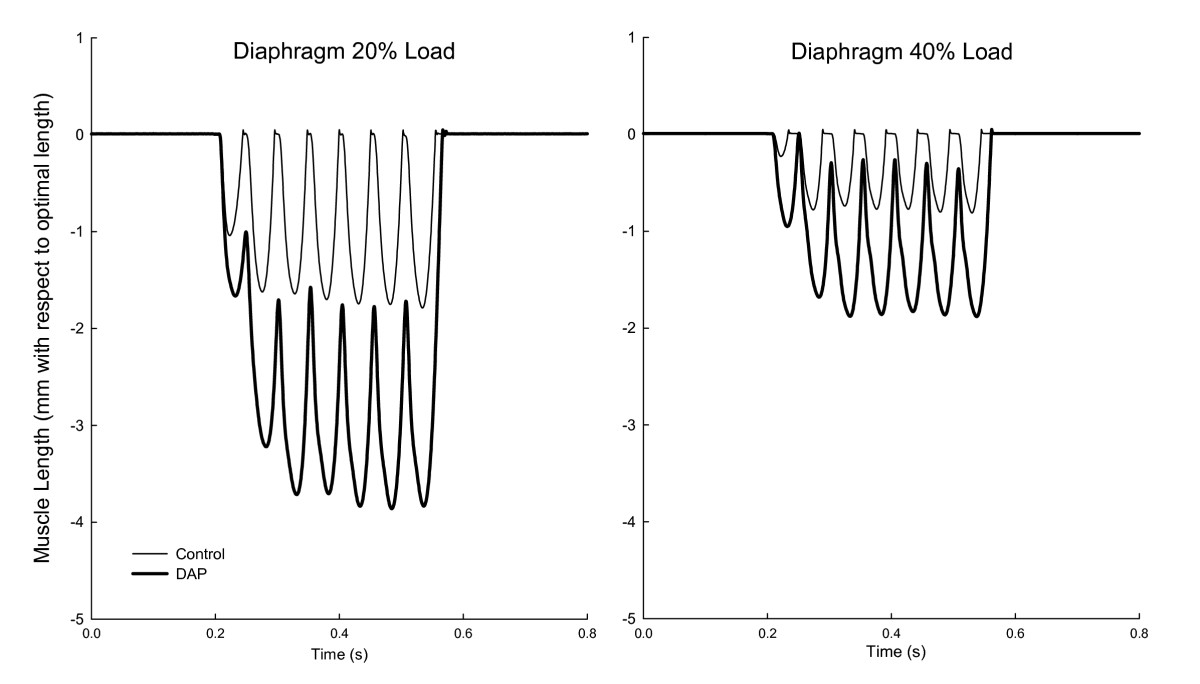 Improvement of diaphragm and limb muscle isotonic