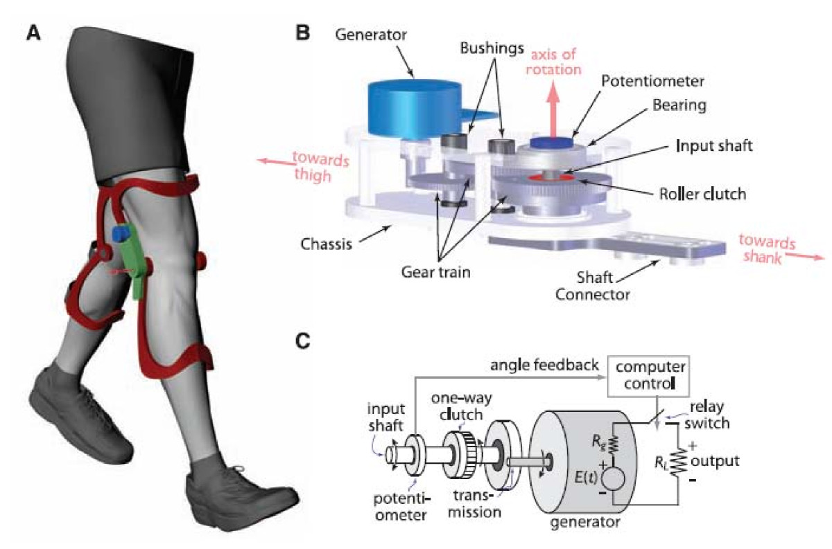 biomechanical mechanism for energy harvesting from Humidity-resisting triboelectric nanogenerator for high performance biomechanical energy harvesting and the proposed breaking mechanism of blended ca/pu.