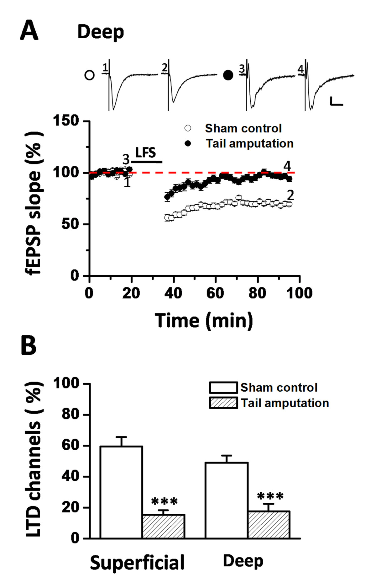 Insular Cortex Alterations In Mouse >> Loss Of Long Term Depression In The Insular Cortex After Tail