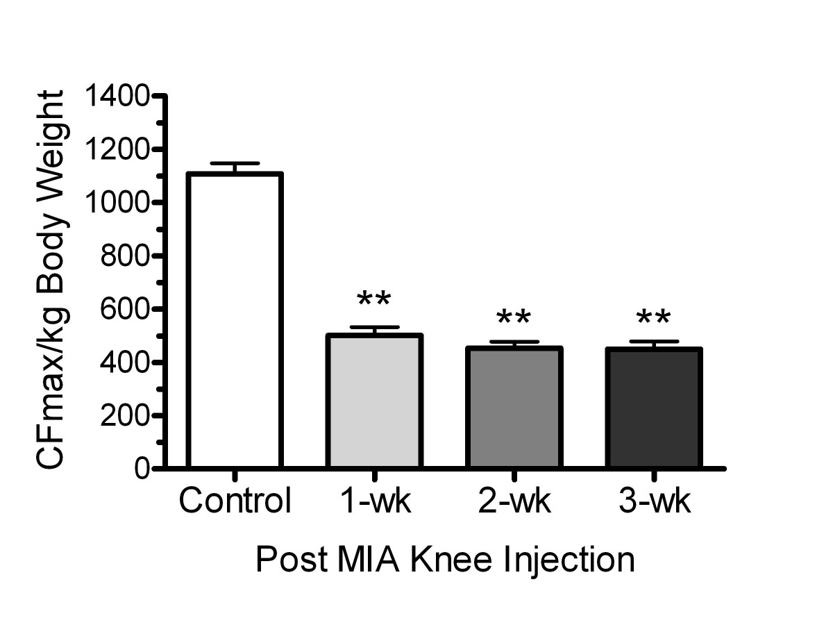 Monosodium iodoacetate induced joint pain is associated with open image in new window ccuart Gallery