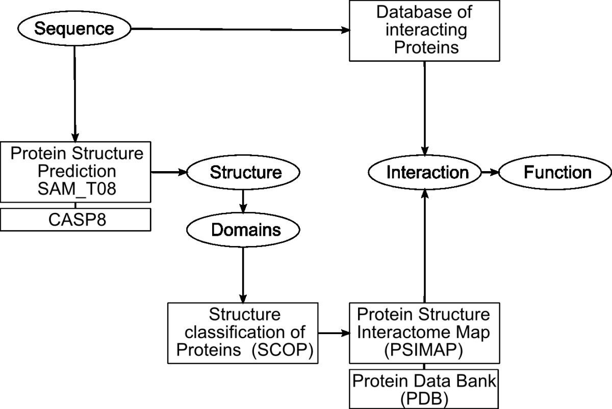 Deciphering peculiar protein-protein interacting modules in