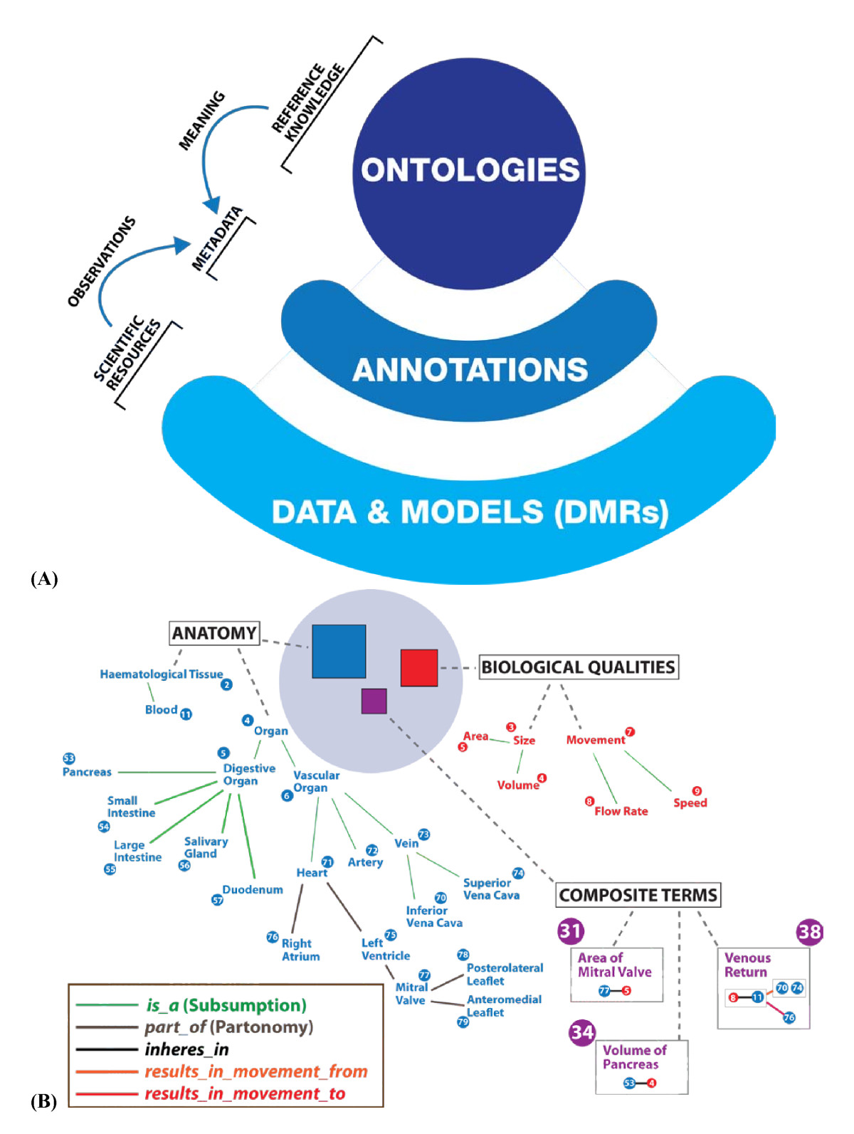 The RICORDO approach to semantic interoperability for biomedical ...
