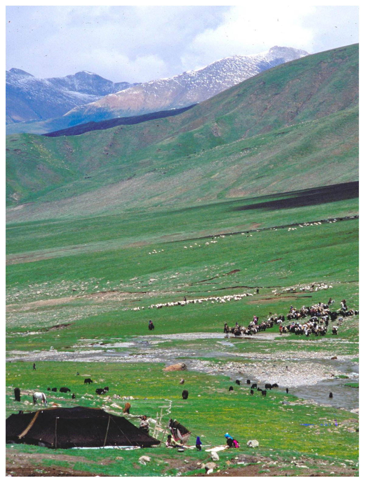 Pastoralists And Wildlife Conservation In Western China
