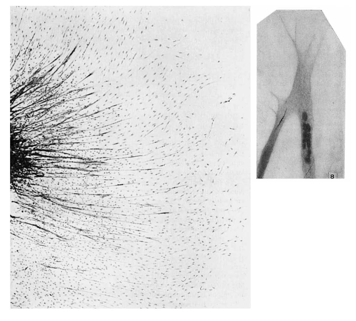 The muscle satellite cell at 50: the formative years | SpringerLink