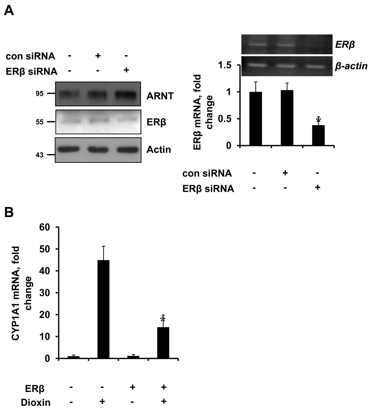 Estrogen receptor beta inhibits transcriptional activity of hypoxia ...