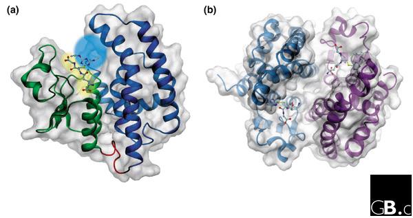 Plant glutathione transferases | SpringerLink