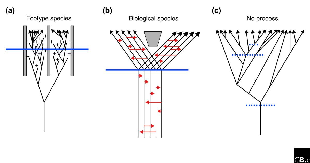 an introduction to the concept of species in the biological species concept bsc Unlike the biological species concept, a cladistic species does not rely on reproductive isolation, so it is independent of processes that are integral in other concepts it works for asexual lineages, and can detect recent divergences, which the morphological species concept cannot.