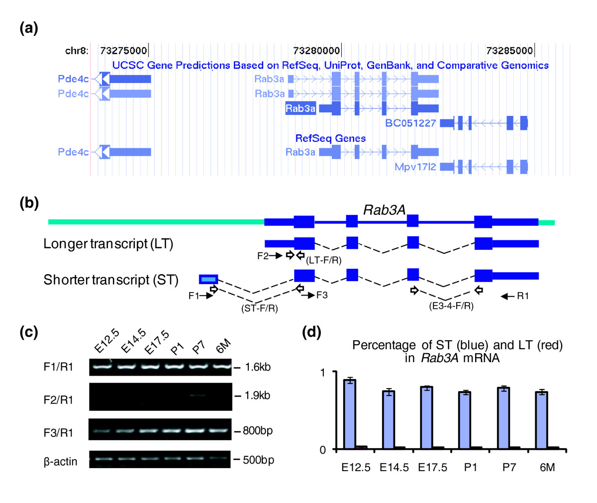 identifying cis regulatory motif in co expressed beetle We report the identification of several putative muscle−specific regulatory elements, and genes which are expressed preferentially in the muscle of the nematode caenorhabditis elegans we used computational pattern finding methods to identify cis−regulatory motifs from promoter regions of a set.