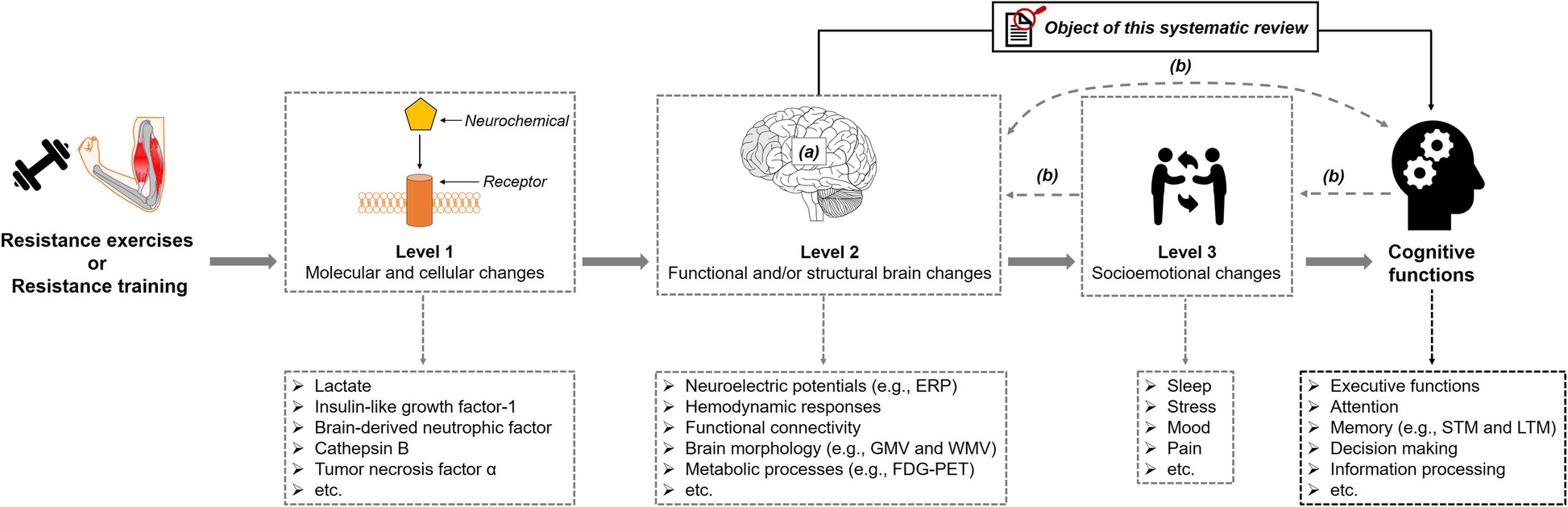 Functional and/or structural brain changes in response to