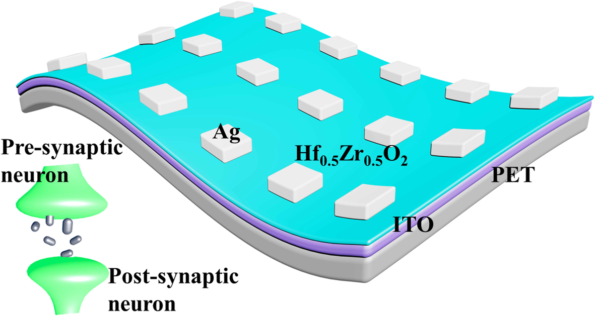 Atomic Layer Deposited Hf0 5Zr0 5O2-based Flexible Memristor