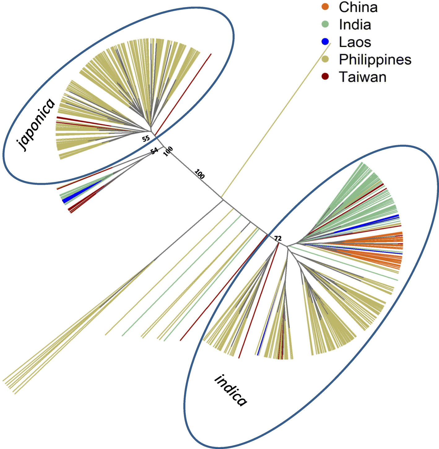 Exploring the genetic diversity within traditional Philippine