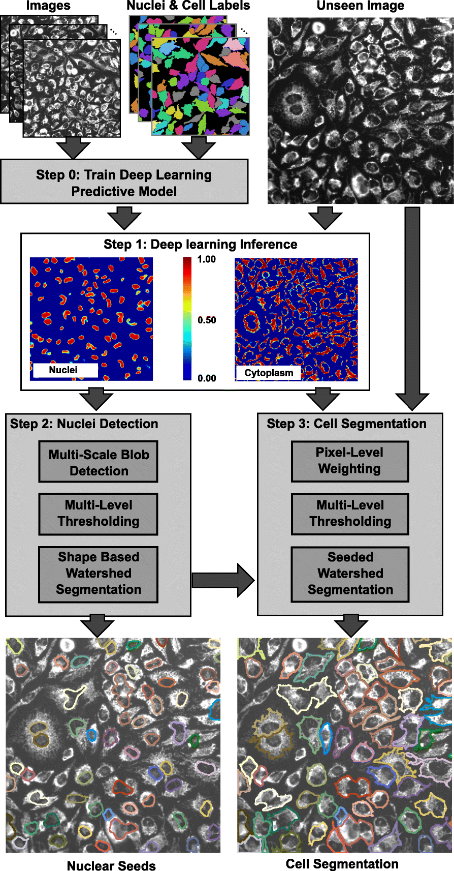 A deep learning-based algorithm for 2-D cell segmentation in