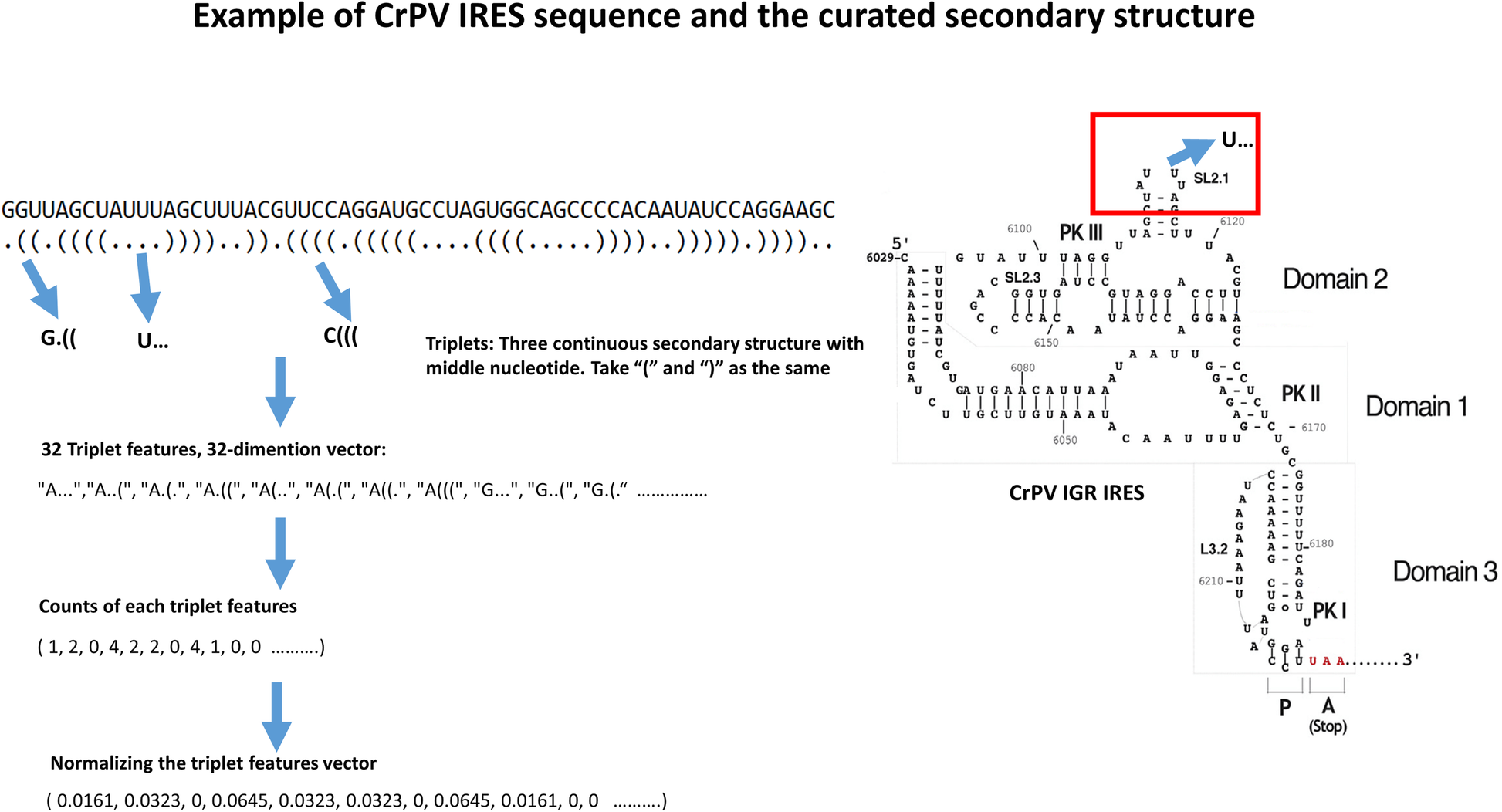 IRESpy: an XGBoost model for prediction of internal ribosome entry